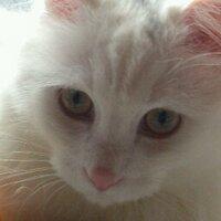 悠希 (名も無き V.A) | Social Profile