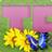 tpex_ovon