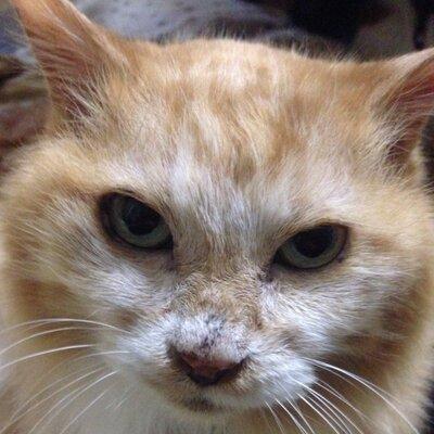 Kazume Cat-maniac | Social Profile