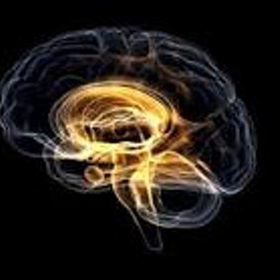 Amygdala Overdrive   Social Profile