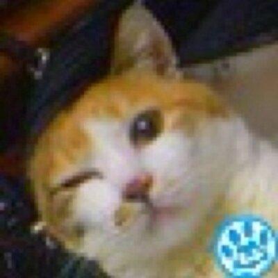手負いのシャミコン提督 | Social Profile