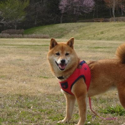 としのりさん | Social Profile