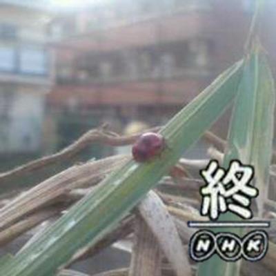 土屋智某さん(膝裏の日ありがとう | Social Profile