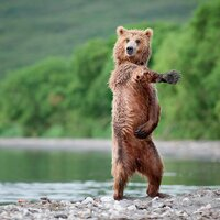 BearsActHuman