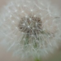 melancholeca diary | Social Profile