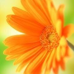 Фото цветов аватарка