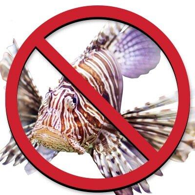 KillTheLionfish Social Profile