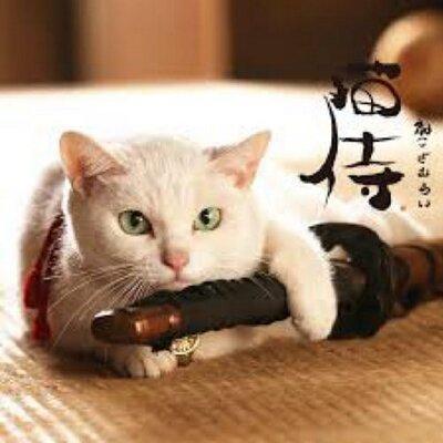 猫侍 cat samrai きゃまくら殿 | Social Profile