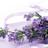 lavendarbreeze profile