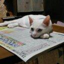 猫田記念 (@0109Mikanhime) Twitter