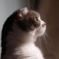 ねこぱぱ | Social Profile
