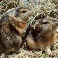 The Silent Lemmings | Social Profile
