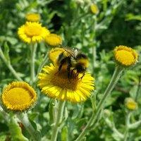 CG Gardeners | Social Profile