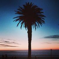 chris bedson | Social Profile