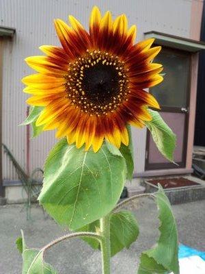 矢野未夏の画像 p1_6