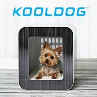 Kooldog | Social Profile