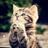 catspics_hyper