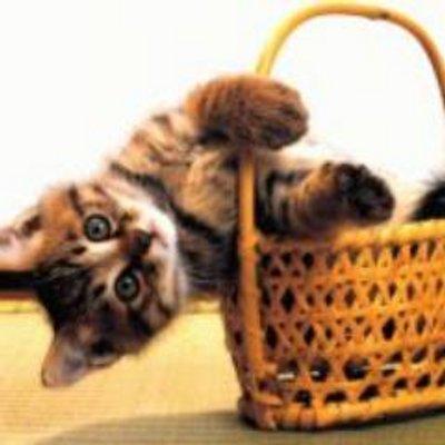 猫ジャマ | Social Profile
