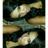 MUA_Queen