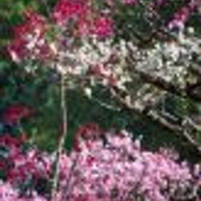 目黒陽子の画像 p1_24
