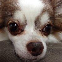 toffy a.k.a. choco | Social Profile