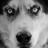 The profile image of Nam_doggy