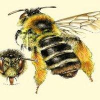 Solitairebijen