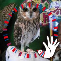 フクロウ@わらしさんに会いに行く♪ | Social Profile