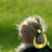 mary_irissounds profile