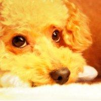 ぎん | Social Profile