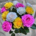 zahir khan (@00923467861199) Twitter