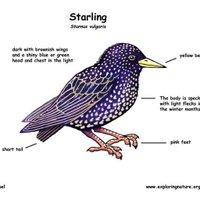 Jaime Starling   Social Profile