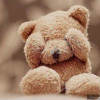Teddy | Social Profile
