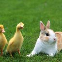 010_rabbit (@010_rabbit) Twitter