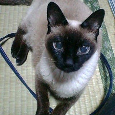 マサム猫 | Social Profile
