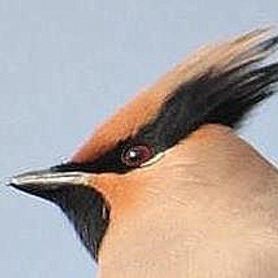 小啄木鳥(花見出来そうだ(*^^*)   Social Profile