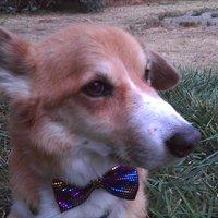 winecountrydog   Social Profile