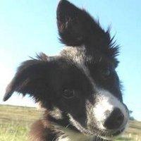Clover, a puppy | Social Profile