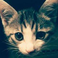 ミクミ | Social Profile