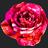 @x_x_Rose_x_x