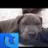 merc4datass profile