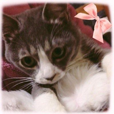 みか@猫のお給仕係 Social Profile