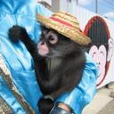 monkey63