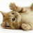 kawayui_cats