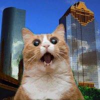 Houston Social Media   Social Profile