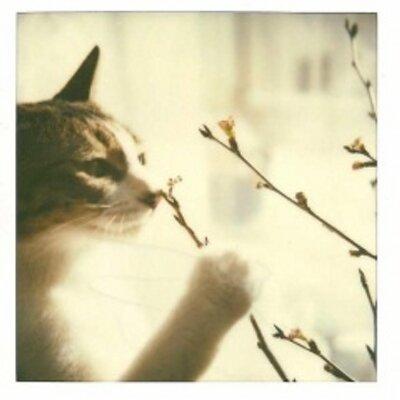 サトウスミコ | Social Profile