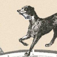 dogactually | Social Profile