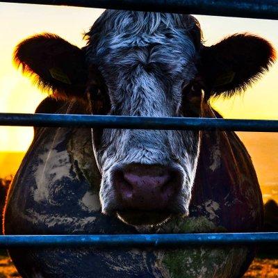 Cowspiracy | Social Profile