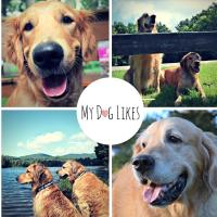 MyDogLikes | Social Profile