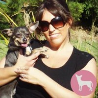 Irresistible Pets | Social Profile